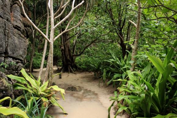 El interior de la isla es un símil bosque encantado.