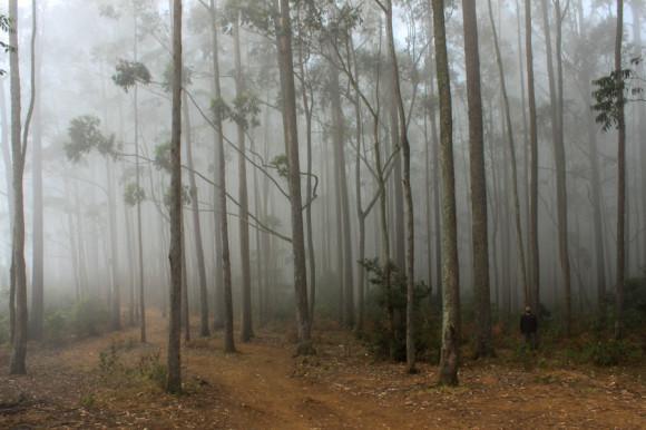 Las nubes se estancan entre los árboles formando este efecto de bosque encantado.