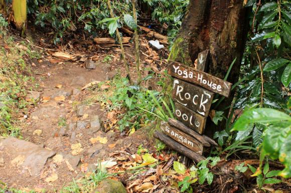 El camino hacia la roca a través de la selva.