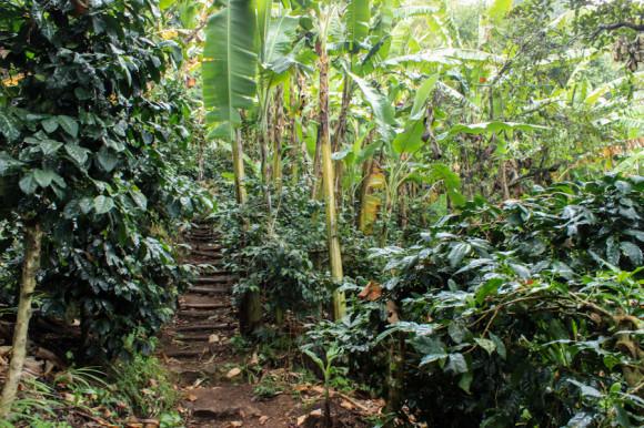 La selva que atravesamos todos los días.