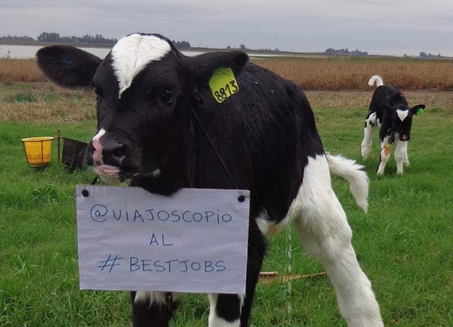 viajoscopio.com - people´s support @viajoscopio al #bestjobs - The Best Job in the World-14
