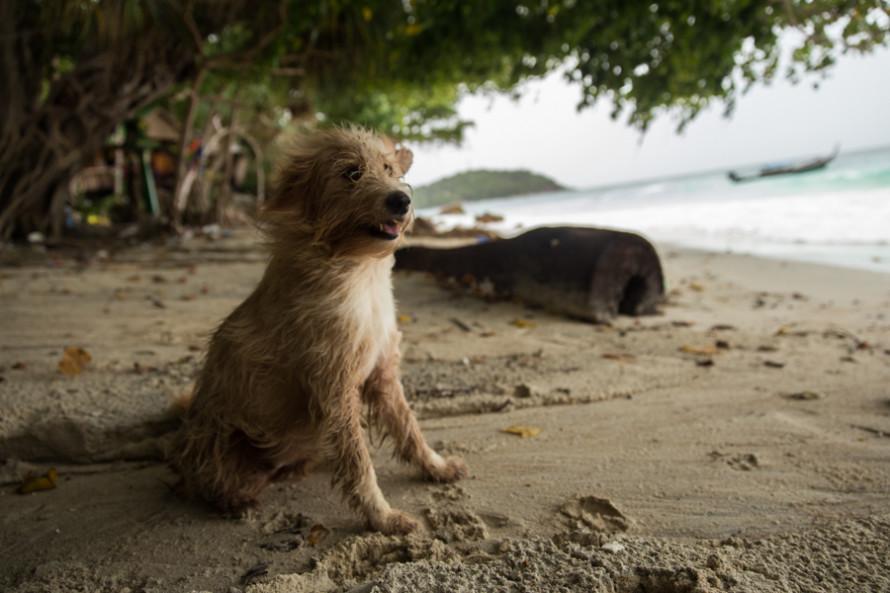 Los perros también están por todos lados, aunque no todos tan lindos y sanos como éste.