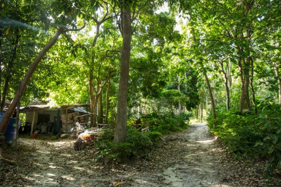 La parte oeste de la isla es casi exclusivamente jungla.