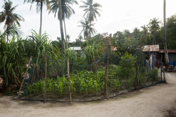 Algunos tienen también un sector con cultivos propios.
