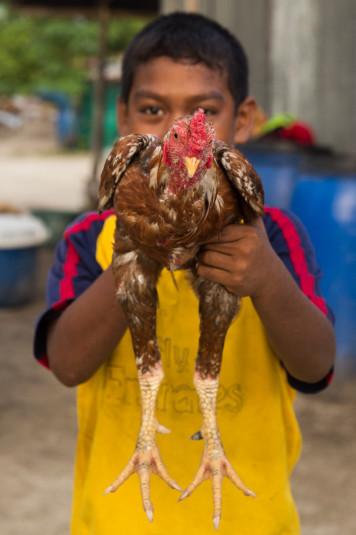 Se crían también animales (sobre todo gallinas).