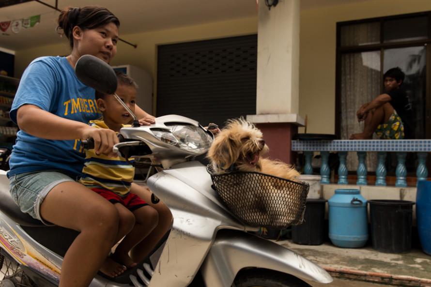 ¿Y este perro? En la moto como en la cama.