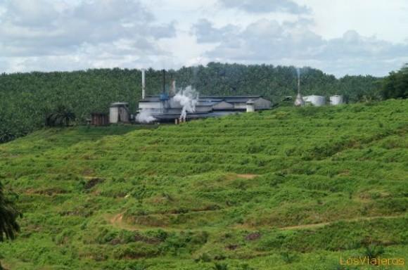Una refinería de aciete de palma en Borneo, Malasia. (Foto: losviajeros.com)