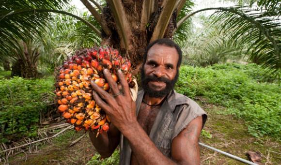 Un trabajador en una plantación sustentable de palm oil. (Foto Jürgen Freund)