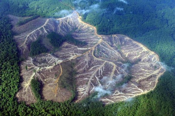 Los bosques son esenciales para la vida en la tierra. El 80% de las especies de nuestro planeta vive en alguno de ellos. (Foto: Greenpeace)