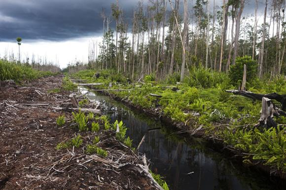Los más biológicamente diversos y complejos son los bosques tropicales. Todos ellos representan ecosistemas de alta complejidad en donde una variación afecta al todo. Además, ayudan al control del cambio climático. (Foto: Paul Hilton)