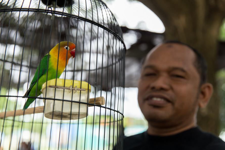...O ser testigo ocular y auditivo de un campeonato de canto de pájaros (?)...