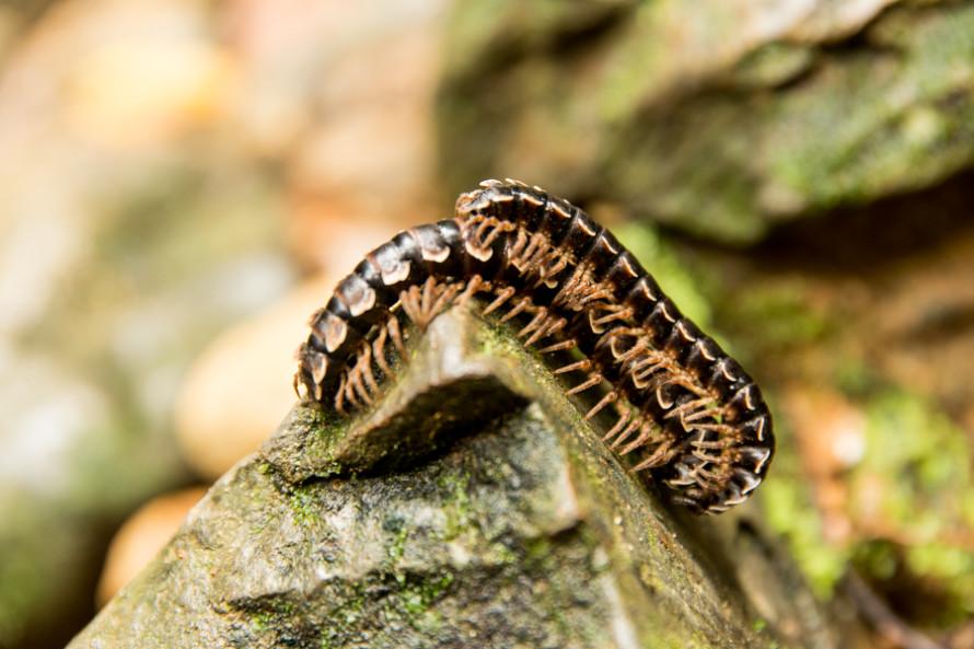 Es genial poder volver a estar en contacto con la naturaleza. Ojalá todo el mundo pudiera amarse un poco más.