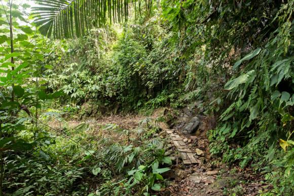 La primera parte del trekking es por un sendero todavía afuera de la selva.