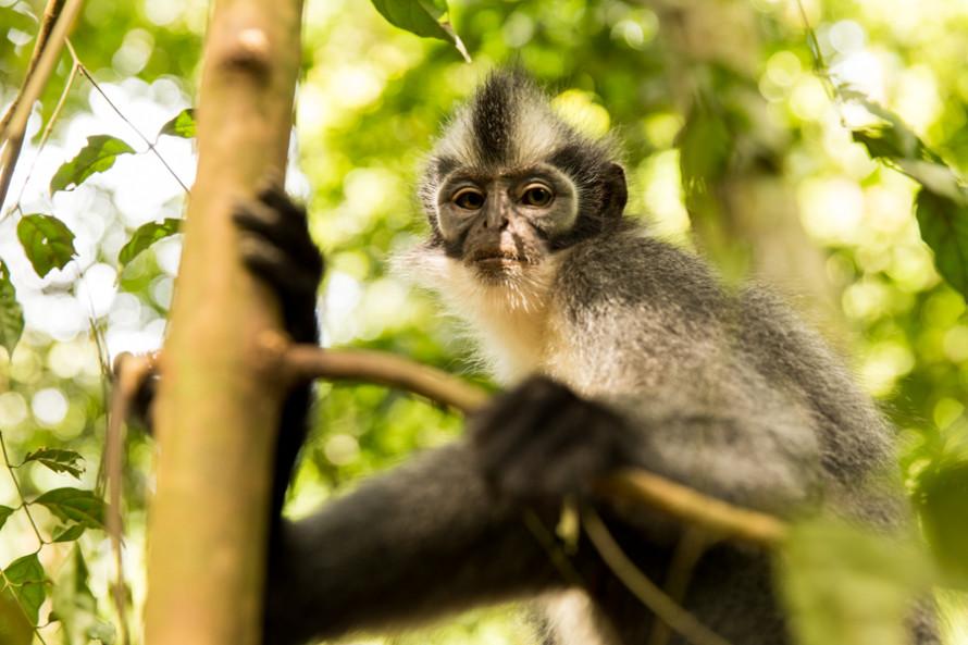 Entre la gran variedad de especies que habitan estas selvas, el primer animalito que nos encontramos fue este Punky Monkey.