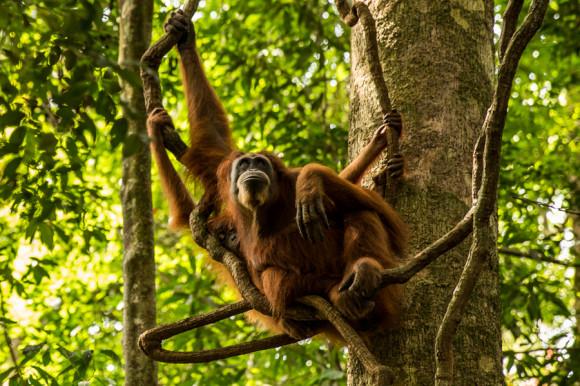 Las hembras viven pegadas a sus crías, a quienes les enseñan cómo sobrevivir en la jungla durante 8 años de vivir uno al lado del otro (¿vieron la cabecita de la cría?).