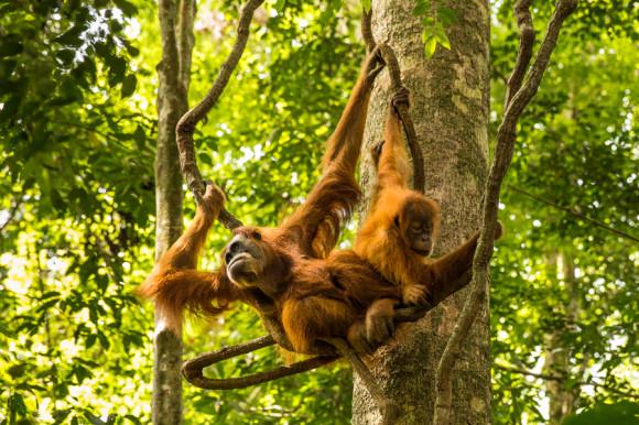Las hembras usan 1.500 hectáreas y los machos entre 4.000 y 10.000. (Foto: VIAJOSCOPIO | Blog de viajes y aventuras)