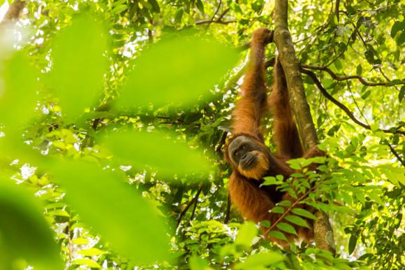 viajoscopio.com - Bukit Lawang, Gunung Leuser National Park, Sumatra, Indonesia -65