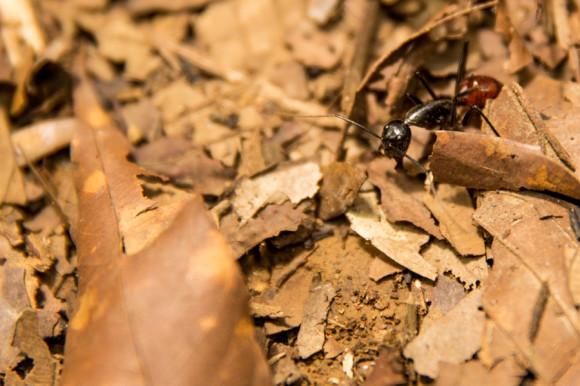 Y si te vas al piso, atenti con las hormigas.