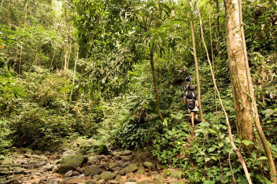 El parque nacional abarca 1 millón de las 2,5 millones de hectáreas del ecosistema Leuser.