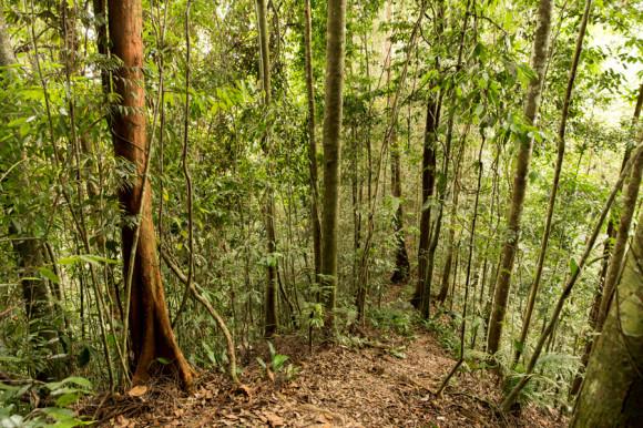 Ya adentro de la selva lo que se ve es más o menos así.