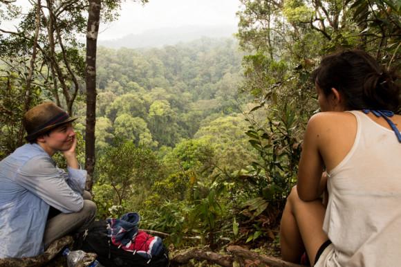 Una de las vistas de la selva desde arriba de la montaña.