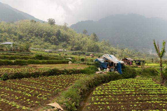Y esto es genial: muchas familias, por más pocos recursos que posean, tienen su terreno donde plantar y cosechar.