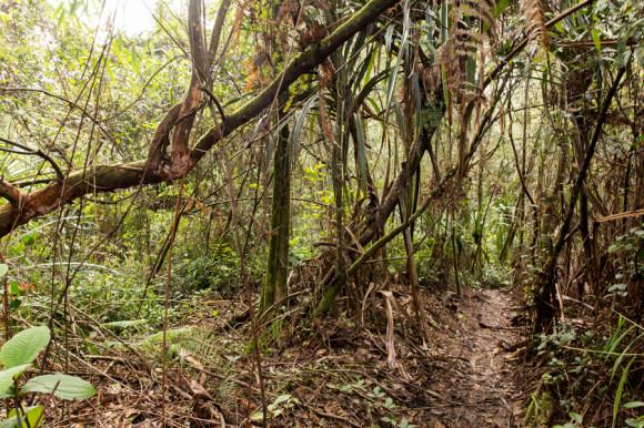La selva en donde supuestaente muchos se pierden y el sendero que se ve claramente.