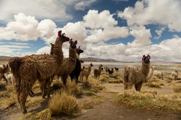 andresbrenner.com - Reserva Natural Eduardo Avaroa, Laguna Colorada, Laguna Verde, Salar de Uyuni, Desierto de Siloli, Tupiza a Uyuni, Bolivia-49