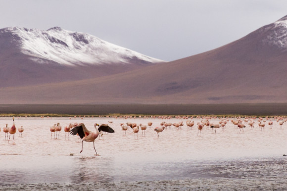 andresbrenner.com - Reserva Natural Eduardo Avaroa, Laguna Colorada, Laguna Verde, Salar de Uyuni, Desierto de Siloli, Tupiza a Uyuni, Bolivia-62