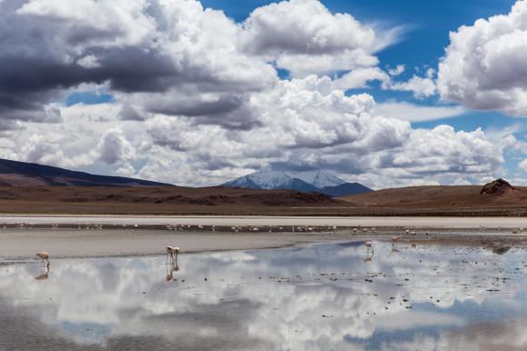 andresbrenner.com - Reserva Natural Eduardo Avaroa, Laguna Colorada, Laguna Verde, Salar de Uyuni, Desierto de Siloli, Tupiza a Uyuni, Bolivia-82