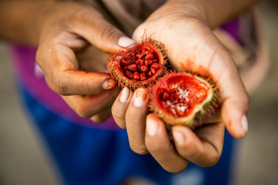Las mismas frutas de la selva son la meteria prima que usan para las tinturas.